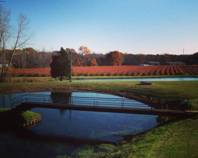 Leduc Farm Blueberry Farm Field Wish Farms