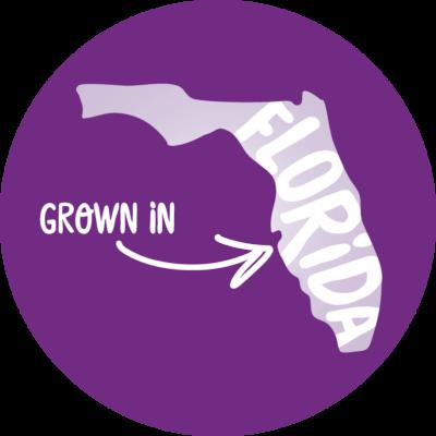 PinkABoo_FL_Purple